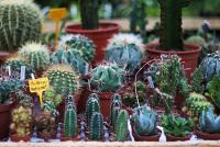Ananta coop for Jardineria barcelona centro